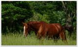 ferguson road horse