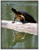 friday turtle.jpg