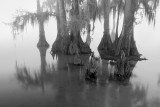 Louisiana Landscapes in Black and White