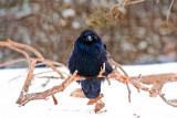 Quote the raven.jpg