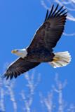 January 2012 - Wildlife - Snow Creek Eagle - Dale Edsen