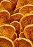 Fungi-2011-28
