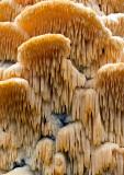 Fungi-2011-27
