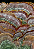 Fungi 2012-8