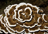 Fungi 2012-5