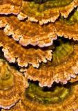 Fungi 2012-3