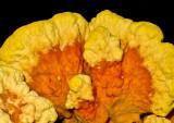 Fungi-2012---10