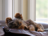 Chloe in comfort