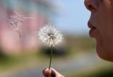 Sarah makes a wish