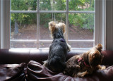 The girls take turns keeping watch on the yard