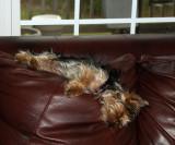 Ivy, master of comfort