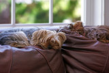 Napping on the couch