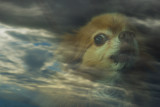 heavenly dog...