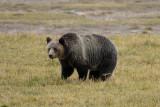 mama bear...