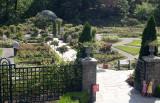 Rose Garden in the New York Botanical Garden