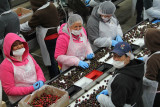 Cherry Packing Plant