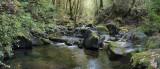 elder creek behind the falls.jpg