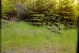 nikon 14-24 14 f5.6 foliage.jpg