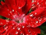 Beauty after the heavy rain