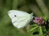 White butterfly on wild flower