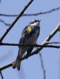 Spring fever birdy