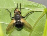 Fly under leaf