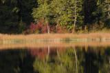 Chemainus Lake Shore