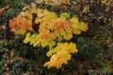 Autumn Palette - JeanH