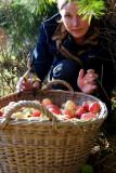 Mony the apple picker