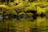 Mossy Reflection