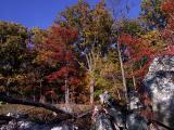 wSugarloaf Trees12a.jpg