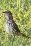 400_14_bird2crp.jpg