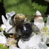 bees_crop_0138.JPG