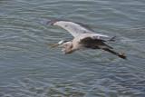 Heron4_crop.jpg