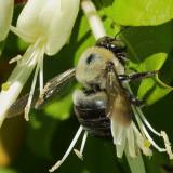 bees_DPP_cropWeb.jpg