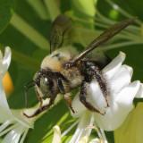 bees_crop_0153Web.jpg