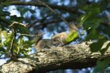 Squirrel2_0189web.jpg