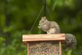 ADSquirrel1.jpg