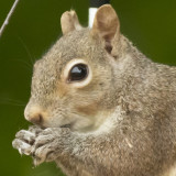 ADSquirrel1_crop.jpg
