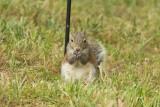 ADSquirrel2.jpg