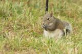 ADSquirrel3.jpg
