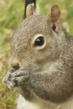 ADSquirrel3_crop.jpg