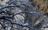 Winter Scene in Yosemite