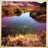 Salt Creek Oasis