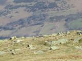 MVADGAAS 2011 00020.jpg