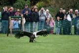 Bird of Prey Show