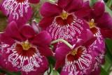 Glasshouse Flora