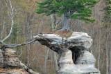 Pine on Chapel Rock