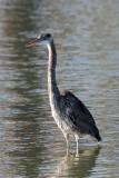 Birding Around Richmond - March 6, 2012