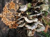 Fungi and Lichen